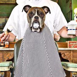 Gabby's Barber Shop, N Clark St, 2860, Chicago, 60657