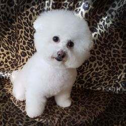 Dog Grooming by Michelle, Cambria Heights, New York, New York, Springfield Gardens 11413