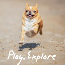 Play. Explore., 5050 N. Sheridan Rd, Chicago, 60640