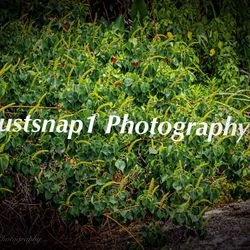 Justsnap1 Photography, Woodvale Dr, 5854, Mobile, 36608
