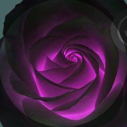 Black Rose Massage Therapy, Dallas, 75233