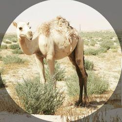 Desert Therapy965, 105 شارع 207, Tariq Complex, Westland, 48185