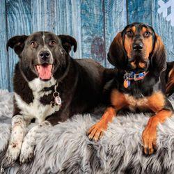 Beth's dog grooming, Washburn Way, 4141, Klamath Falls, 97603