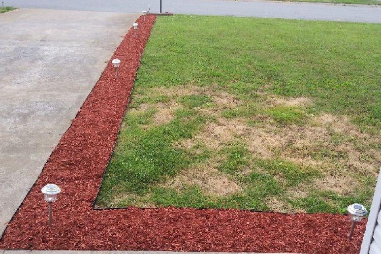 AP's Friendly Community Lawn Service